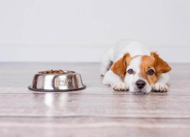 pierderea în greutate provocarea pentru animale de companie